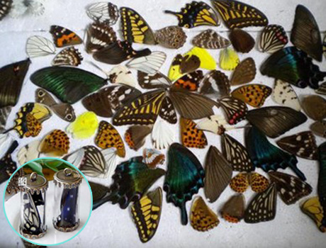 Real butterfly wings(Sold in per package of 20pcs,random mix)
