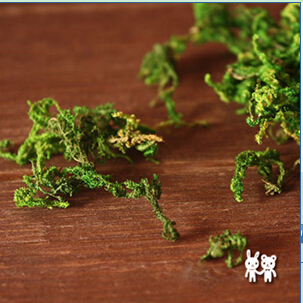 Moss(Sold in per package of 2g)