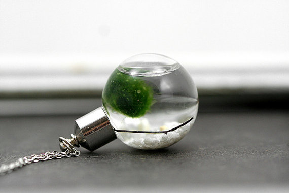 Living Marimo Moss Necklace