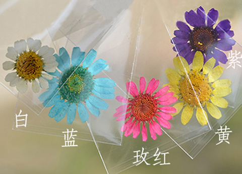 Dried Pressed Daisy(Sold in per package of 20pcs)