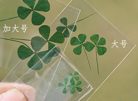 Real dried Clover Leaf Pressed Flowers(Sold in per package of 20pcs)